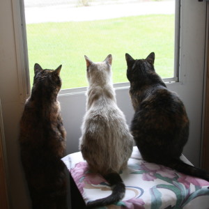 3 cats waiting
