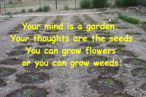 your mind is a garden saying