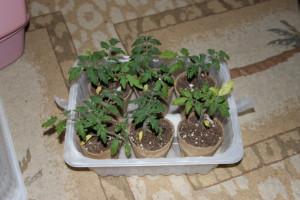 smaller plants