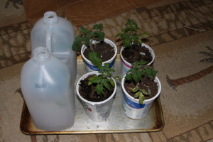 bottles over plants