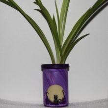 Full Moon Cat Silhouette Plant Starter